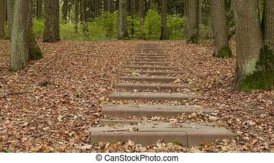 Stairs in the autumn park. Smooth dolly shot