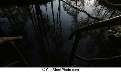 Stairs in the pond in forest at the sunrise