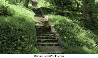 Stairs in tropical rainforest at summer day - Batumi,...