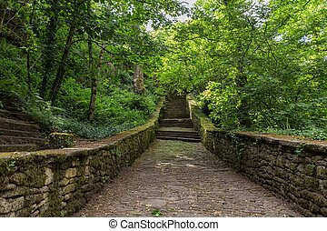 Stairs leading to green forest