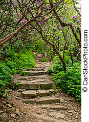Stairs Through Rhododendron Bushes