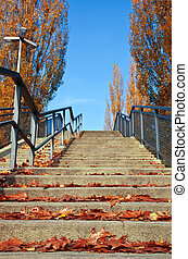Stairs with autumn leaves on a sunny day.