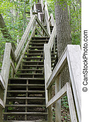 Stairway Ascending a Ravine in a Deciduous Forest - Rock ...
