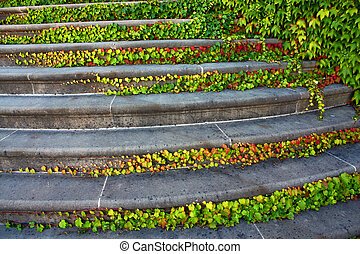 stairway with ivy