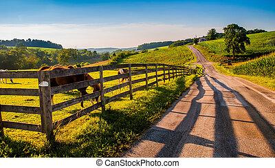 staket, och, hästar, längs, a, land, backroad, in, lantlig,...