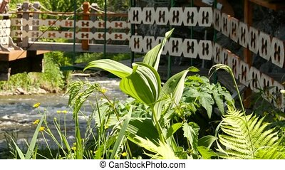 stalk of green grass on a shore and bridge over rapid water...