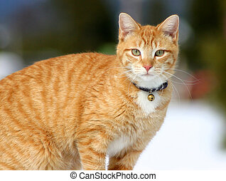 Stalker 17 - Feline hunting in the snow