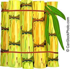 Stalks of sugar cane. Vector illustration on white...
