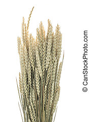 Stalks of wheat ears on white background
