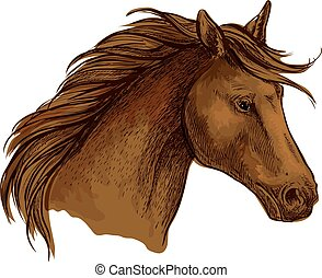Stallion horse sketch of brown arabian racehorse