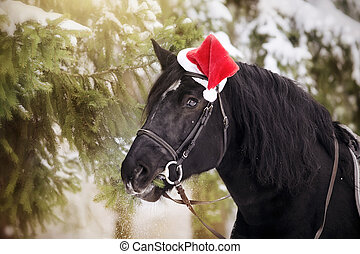 Stallion in a red Santa Claus hat eats fir-tree branches