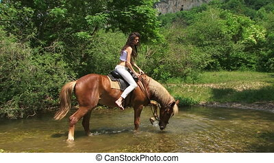 Stallion in a river - Brown stallion crossing a river