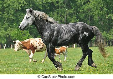 Stallion in the field