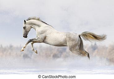 stallone, silver-white