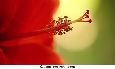 Stamen Of The Hibiscus Flower Macro Close Up Plant Life -...