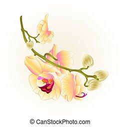 stamm, phalaenopsis, orchidee, gelber , vector.eps