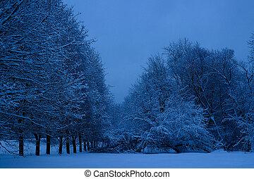 stan, po, kolomenskoye, moskwa, las, opad śnieżny, mieszany, rosja