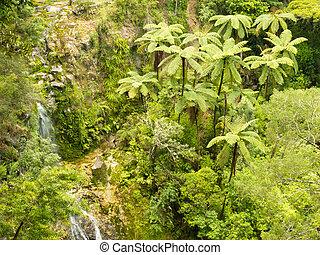 Stand of NZ tree ferns in rainforest wilderness