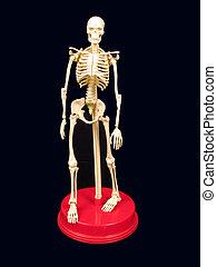 stand, squelette