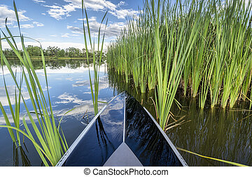 stand up paddleboard in green reeds