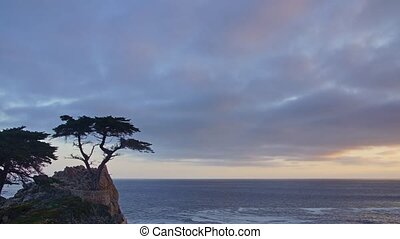 Standalone Tree, 17 Mile Drive - Panoramic time-lapse of...