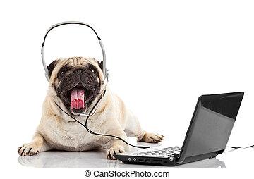 standardiste, appeler, agent., centre, chien, carlin