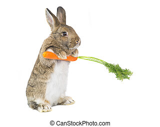 standing bunny with a carrot