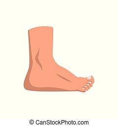 standing, fondo, illustrazione, vettore, piede umano, bianco