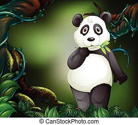 standing, foresta, profondo, panda