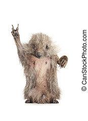 Standing hedgehog - tanding hedgehog with a symbol of a ...