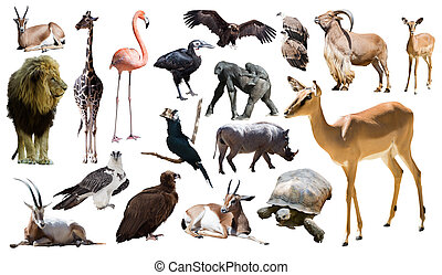 impala and other African animals. Isolated over white