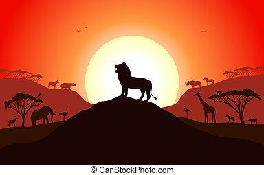 standing, leone, ruggire, silhouette, collina