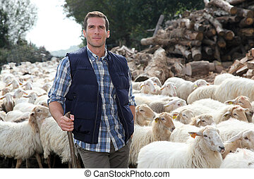 standing, pastore, prato, sheep