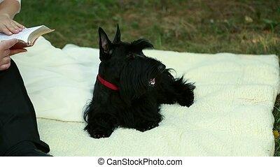 Standing scottish terrier