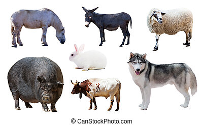 Husky and other farm animals. Isolated over white
