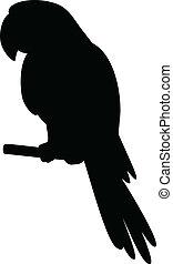 stange, silhouette, papagai