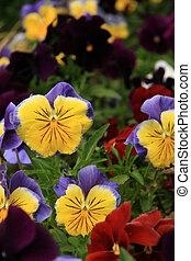stanley, -, parco, fiore giardino, vancouver, canada