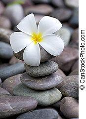 stapel, fragipani, steinen