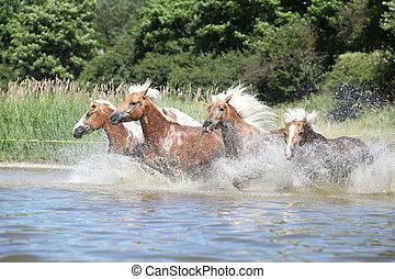 stapel, von, junger, kastanie, pferden, in, wasser