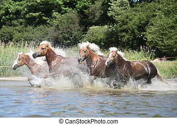 stapel, von, kastanie, pferden, rennender , in, der, wather
