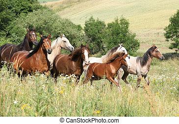 stapel, von, pferden, rennender , in, blumen