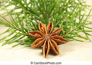 Closeup of star anise and fir branch. Christmas spice