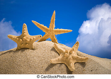 star fish and sand on blue sky background