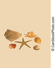 Star fish and shells - , a star fish with sea shells over ...