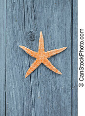 star fish and wood - star fish and rustic wood