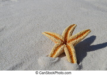 Star fish on beach