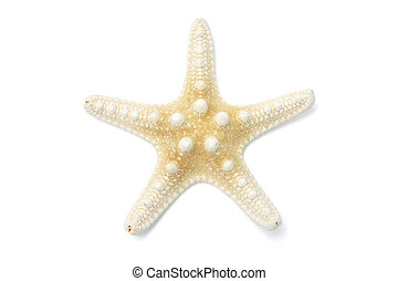 Star Fish on Isolated White Background