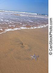 Star fish on the beach, India