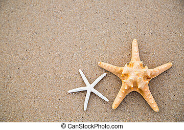 Star fish pull on beach for add your text and image.