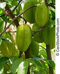 Star Fruit on tree.